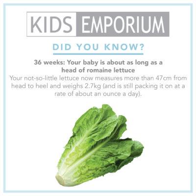 Week 36 | Kids Emporium